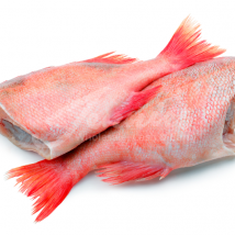 Headless Red-Bream